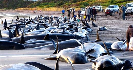 whales_suicides
